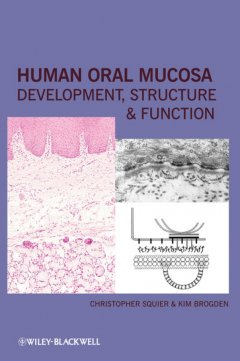 human-oral-mucosa-development-structure-and
