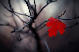 Осеннее одиночество (с прочтением)