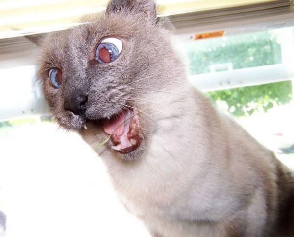 cat c training norwich