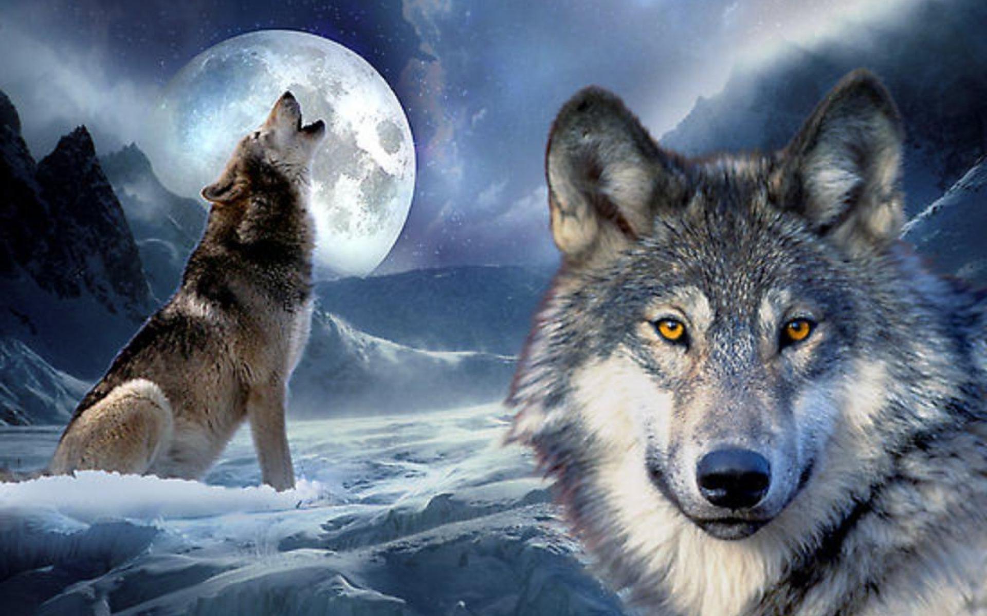 Воющий в ночи волк загрузить
