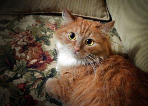 Басян знаменитый кот