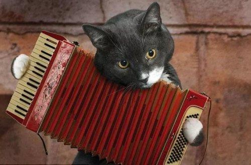 Кот гармонист