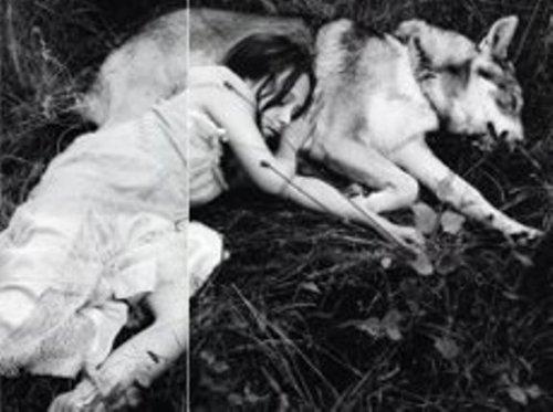 Охота на слепого волка