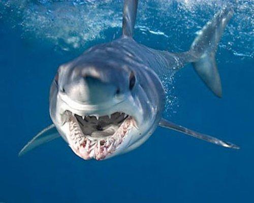 И полный океан акул