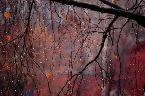 За окном осень