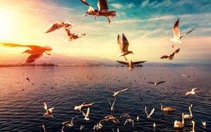 Воздух (автор Елена)