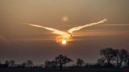 Как будто птица на закате дня
