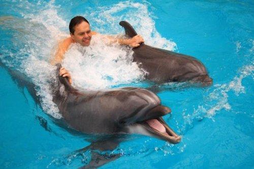 Дельфин и певец Арион