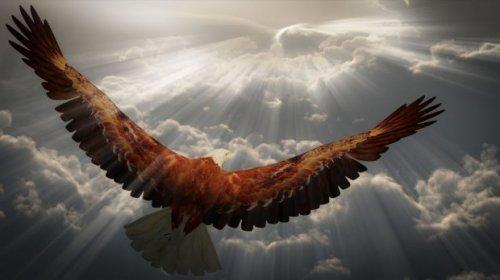 Тень Парящего Орла