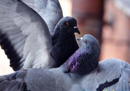 Мне голубь гулил с водонапорной башни!..