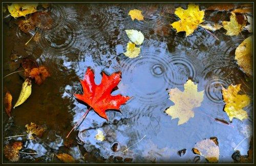 Сентябрьский дождь