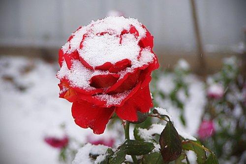 Снеги