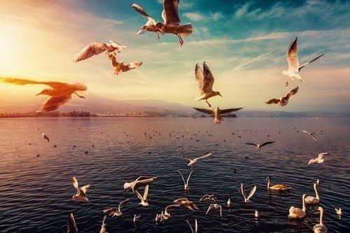 Озеро Розовых Чаек (песня)