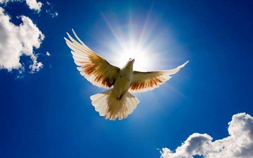 Птица лета