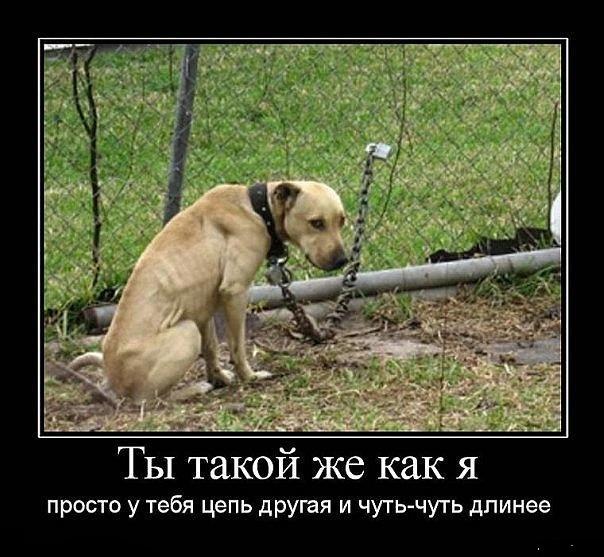 Собака на привязи – плохой охранник