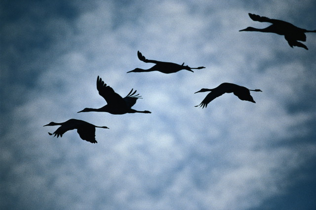 Скачать песню мы вместе с птицами в небо уносимся